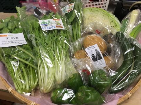 9月19日野菜