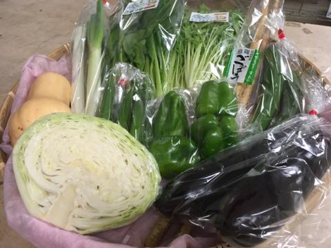 9月4日野菜
