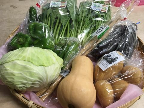 9月5日野菜